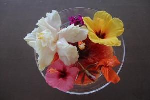 2015-04-21 Cindy TOR 8 036new