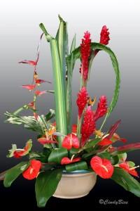 2015-12-18 Flowers 195 kb