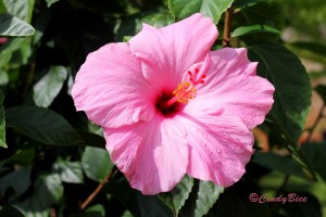 2016-03-29 9. WGS Know, God is with you Hibiscus